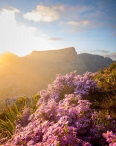 A Nature Walk with a Craft Gin Twist in the Quteniqua Mountain