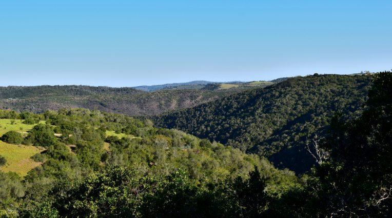 Knysna Forest 1