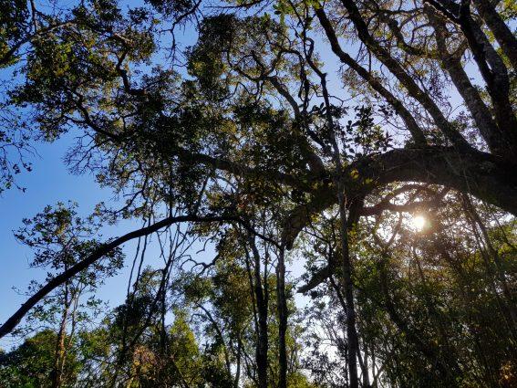 Kynsna Forest 5